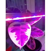 Светильник для растений PPG T8i- 600  Agro  8w IP20  Jazzway